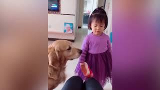 小孩要打妈妈,金毛的做法亮了,太聪明了