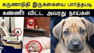 மனதை உருக்கவைக்கும் கலைஞரின் நாய்கள் | kalaignar karunanidhi dog sad in kalaignar house stalin