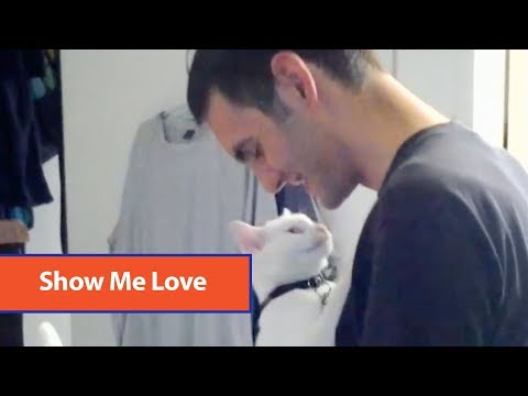 Adorable Cat Showers Guy With Affection