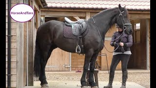Teaching The Collected Canter To My Friesian Horse