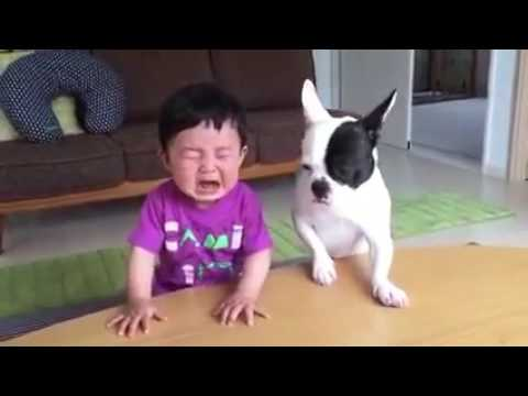Whatsapp Funny Videos 2017 - Most Funny DOG AND KIDS Videos 2017