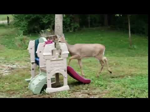 Unwitting Deer Plays Phil Collins' Drum Solo From 'In the Air Tonight' While Walking Through a Castle Slide