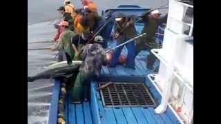 Когда ловят тунца в каком месяце