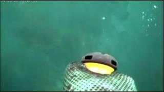 Pesca a poco fondo con Mito