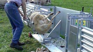 पशुपालन के काम मैं इस्तेमाल होने वाली आधुनिक मशीनें  ||  Modern Farming Technology
