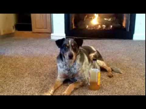 Amazing Vinegar uses for Dogs and Cats!