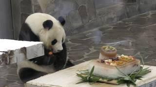 ジャイアントパンダ『タンタン』の誕生日会王子動物園2018年9月16日