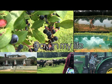 , title : 'GRWM /Vloggy Vlog , Taking Pictures, Berry Tree, Seeing the Cows , Horses n etc.