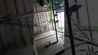 Murai Batu Tangse ฟร ว ด โอออนไลน ด ท ว ออนไลน คล ปว ด โอฟร