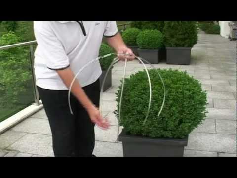 Buchsbaum schneiden mit egrola Kugelschnitt-Schablonen.mp4