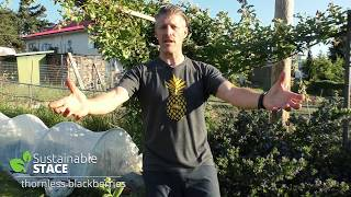 How to Grow Thornless Blackberries