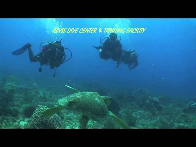 Scuba Diving Tortugas Reef, Playa del Carmen