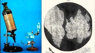 How Robert Hooke Dicovered The Cell