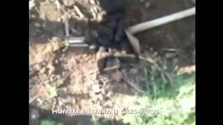 Casal enterra 11 filhotes de cachorro vivos no interior do RS   Notícias   R7 Cidades
