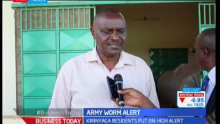 Kirinyaga farmers put on high alert over army worm attack