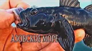 Секреты рыбной ловли в азовском море