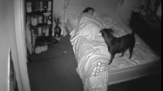 Paranormal Activity CCTV Bossy the Psychic Dog Sense Ghost Footage