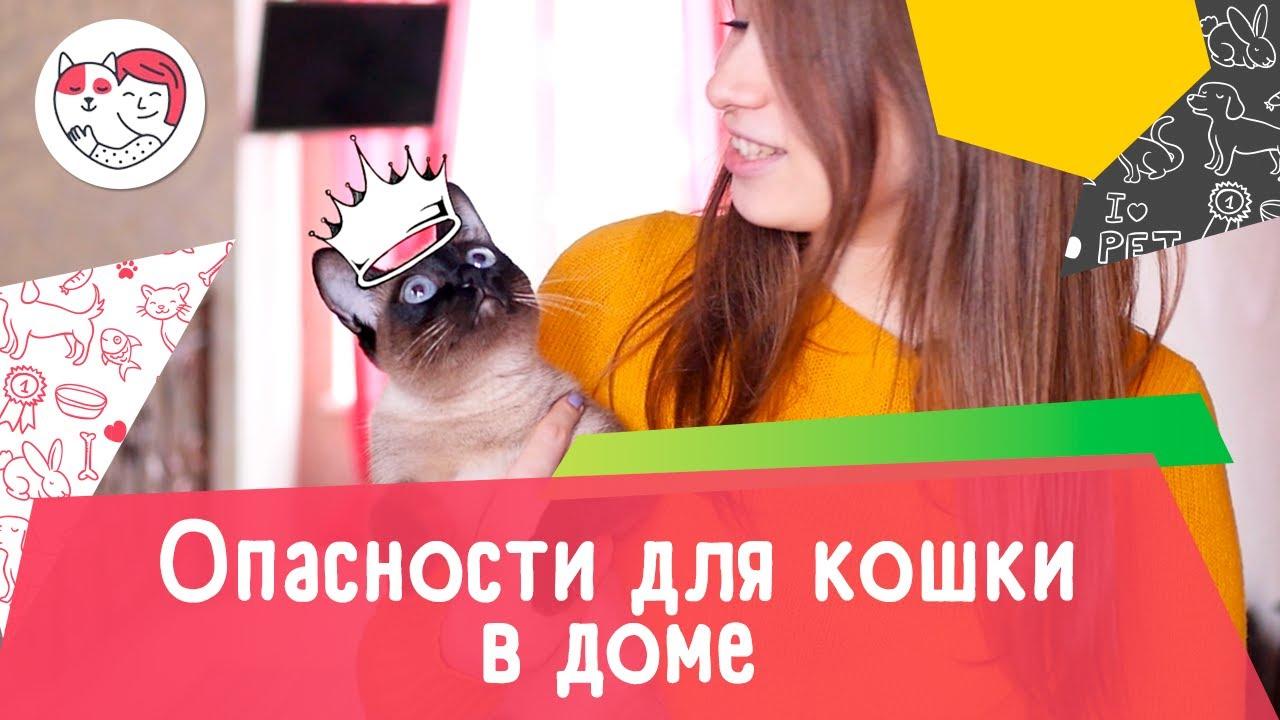 5 опасностей для кошки в доме