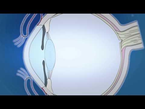 Оправа для очков для зрения макс мара