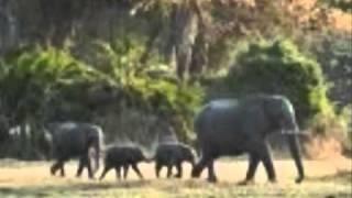 DJ BEAR - Baby Elephant Walk 2010
