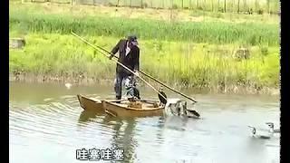Китайская традиционная рыбалка с бакланами.