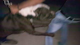هجوم كلب البيتبول على صاحبه ومدربه مع جمال العمواسي