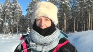 Husky safari in Lapland 2016