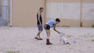 Obedience Training with Prince Jr.   Pit Bulls and Parolees