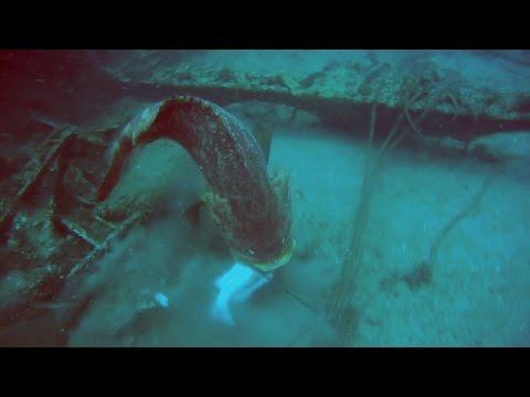 Sleip kjempeabbor lurte fisker gang på gang
