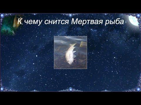 К чему снится Мертвая рыба (Сонник)