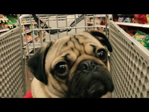 Doug the Pug - All I Want For Christmas Is Food [Parody]