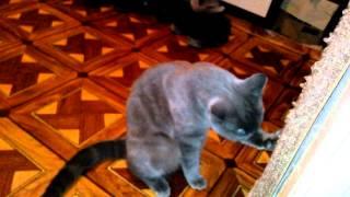 когтеточка новая. Когтеточка кота, кошки №2