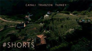 Trabzon Turkey Footage   An Epic Cinematic FPV Flight On Tea Plantations in Cayali Trabzon Turkey