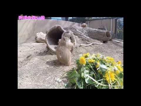 どうぶつにお花のプレゼント~プレーリードッグ編~★到津の森公園