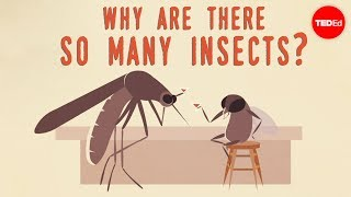 Why are there so many insects? – Murry Gans