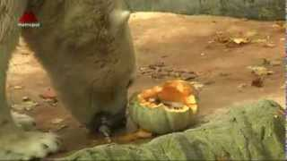 Dýňové hody v Zoo