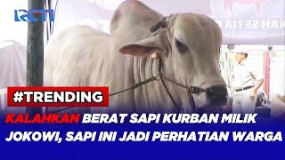 Sapi Kurban Seberat 1,4 Ton jadi Pusat Perhatian Warga di Jakarta Pusat #SIP 20/07