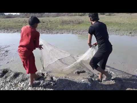 Net Fishing catching fish  from the river