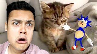 SONIC SLAPS A SLEEPING KITTEN (Reacting To Memes)