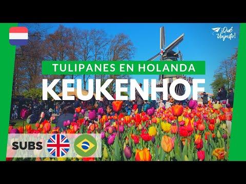 Keukenhof: Todo sobre el mayor parque de tulipanes del mundo   Holanda (2019)