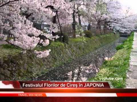 Festivalul Florilor de Cires in JAPONIA