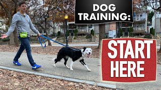 Canine Coaching Fundamentals (Watch this earlier than some other canine coaching video)  Latest Pet News & Insurance Deals mqdefault