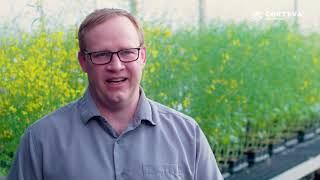 Corteva - Clubroot Q&A Video