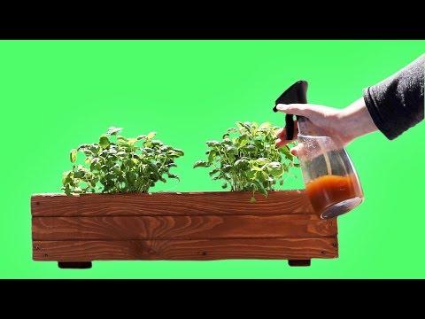 Insektenspray DIY Anleitung für Spray gegen Krabbeltiere auf deinen Pflanzen  - ohne Chemie!