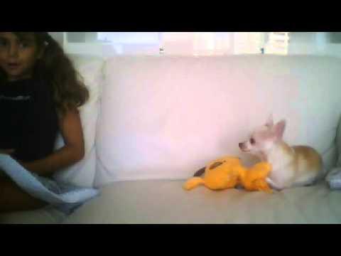 Vídeo de cámara web del 6 de agosto de 2013 16:00
