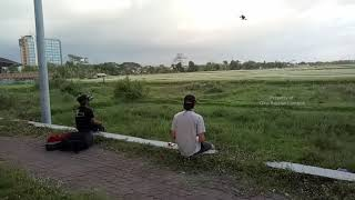 Drone racing over rice fields #short