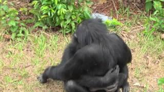 Любовь обезьян искренна и проста
