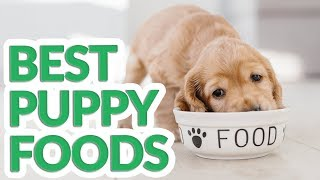 Best Puppy Food 2019 - 10 TOP Puppy Foods