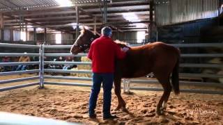 Neil's Horse Handling Masterclass Lesson 1 Preview