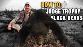How To Judge Trophy Black Bears - Hunting Black Bears